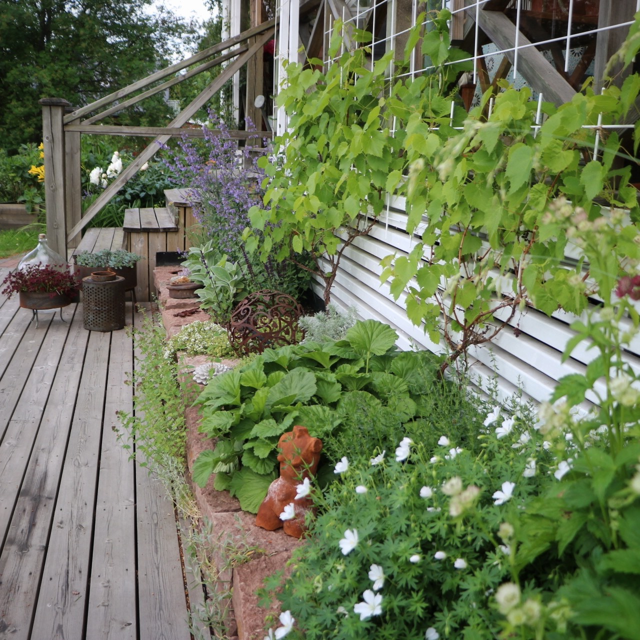Trädgårdinorr IMG_2414